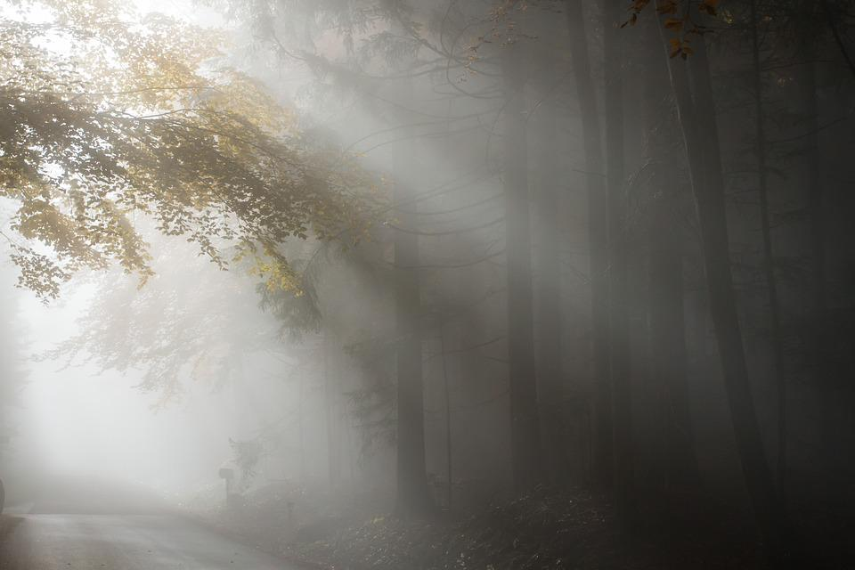 Fog, Autumn, Light, Nature, Landscape, Forest, Tree