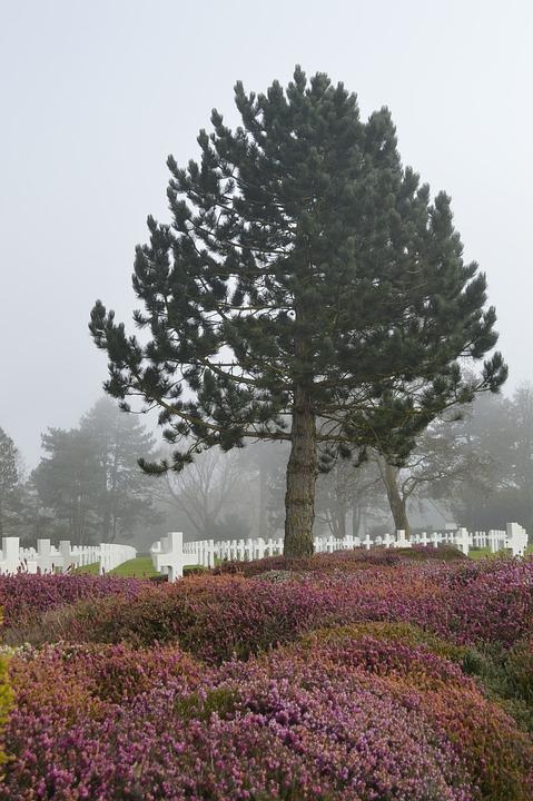 Tree, Cemetery, American, Fog, Falls, Normandy, France