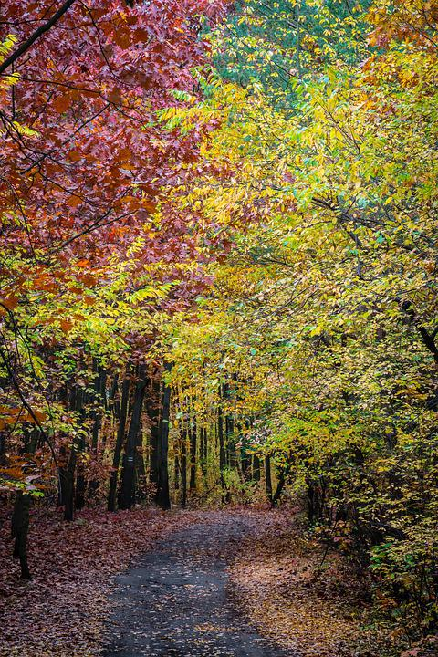 Autumn, Tree, Forest, Foliage, Colorful, The Path