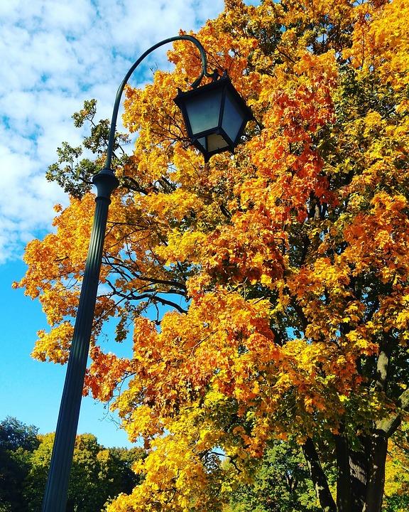 Leaf, Autumn, Foliage, Tree, Municipal, Lantern, Park