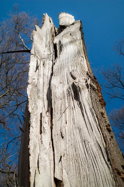 Forest, Forward, Damage, Canceled, Tree, Wood