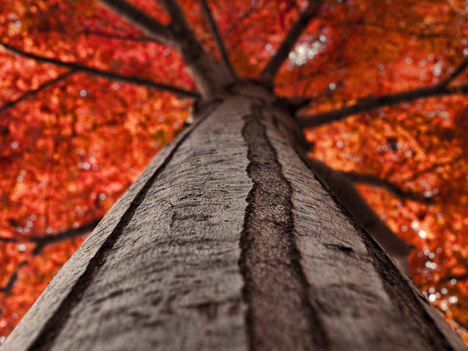 Autumn, Tree, Nature, Fall, Forest, Wood, Leaf