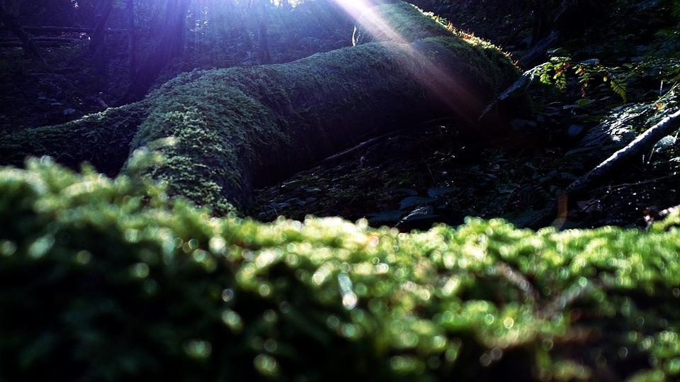 Forest, Moss, Plants, Green, Nature, Tree