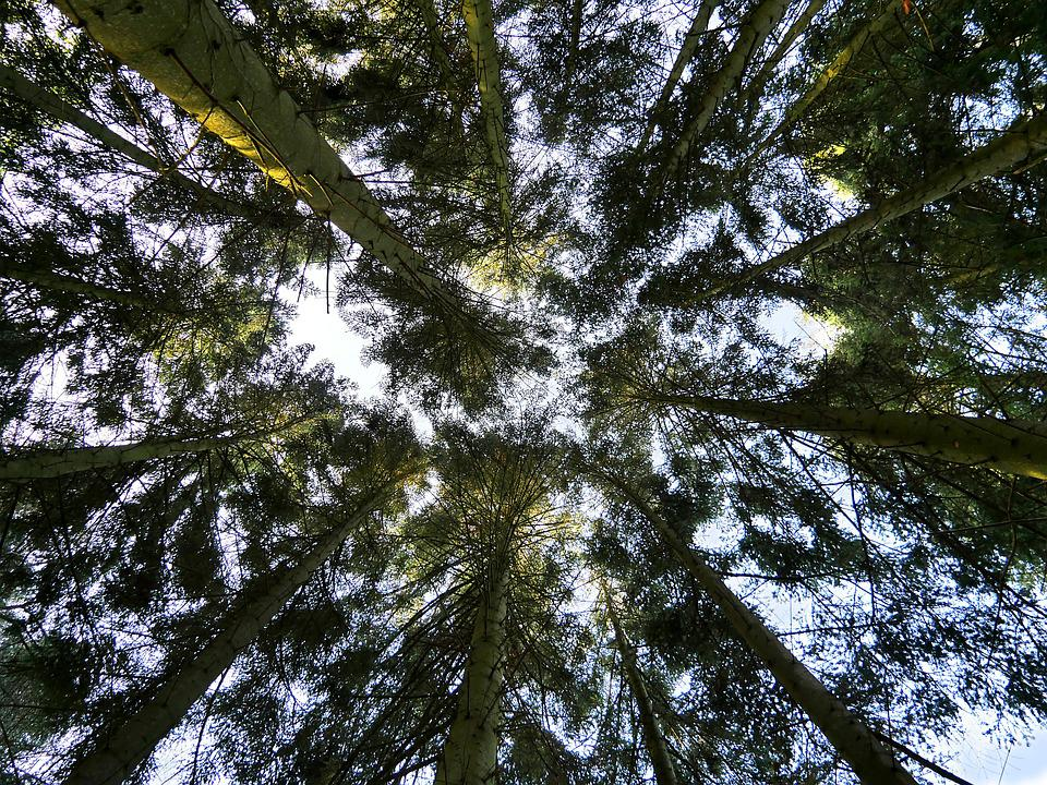 Tree, Summits, Nature, Branches, Sky, Light, Forest