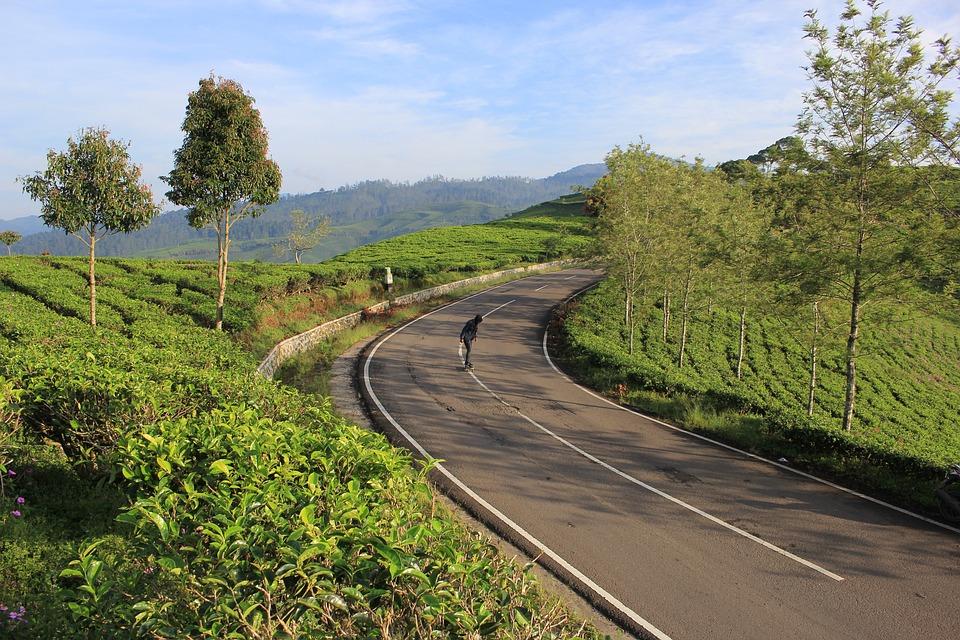 Tea, Tea Plantation, Skateboard, Nature, Fresh, Tree