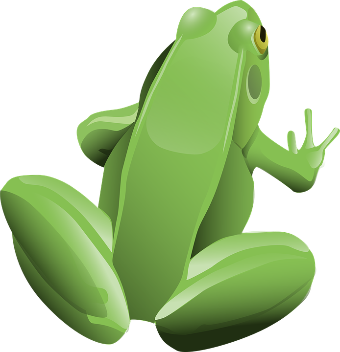 Frog, Amphibian, Animal, Green, Tree Frog