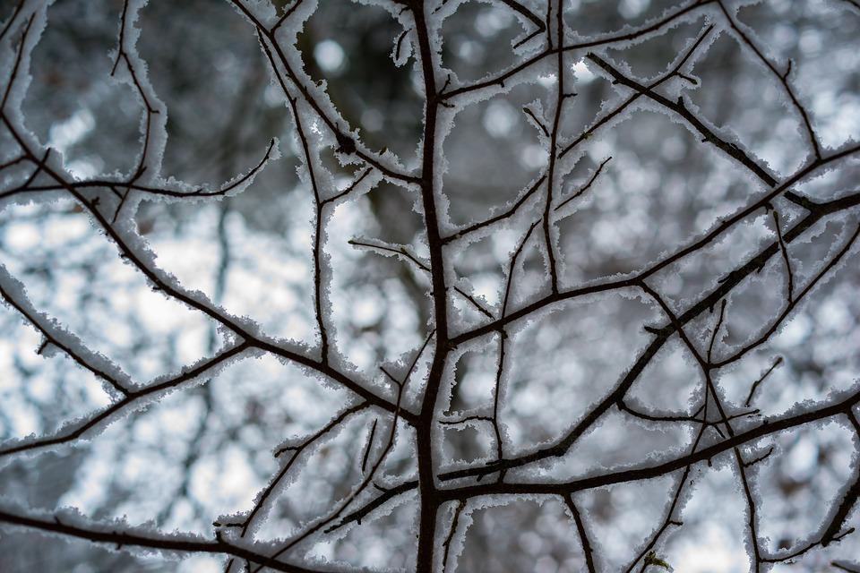 Winter, Frost, Snow, Nature, Cold, Tree, Plant, Frozen