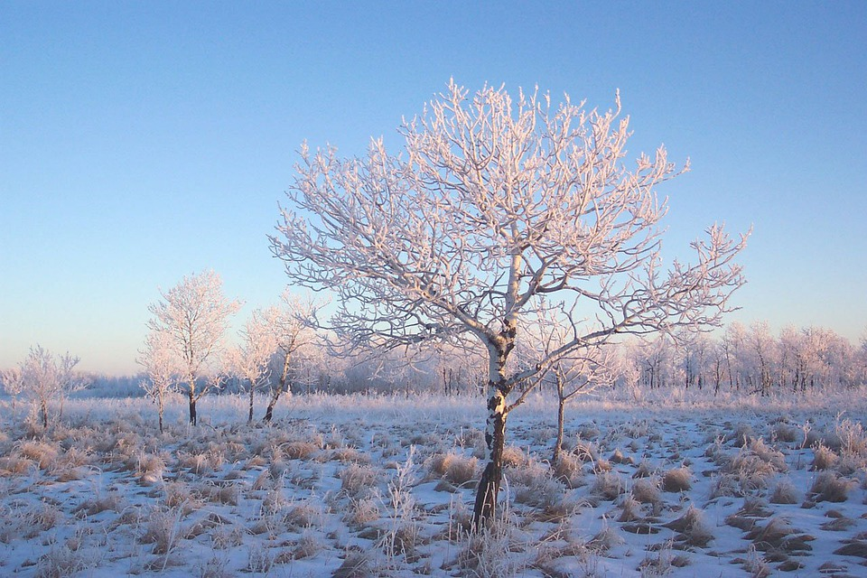 Frost, Jack, Frosty, Winter, Cold, Snow, Tree, Ice