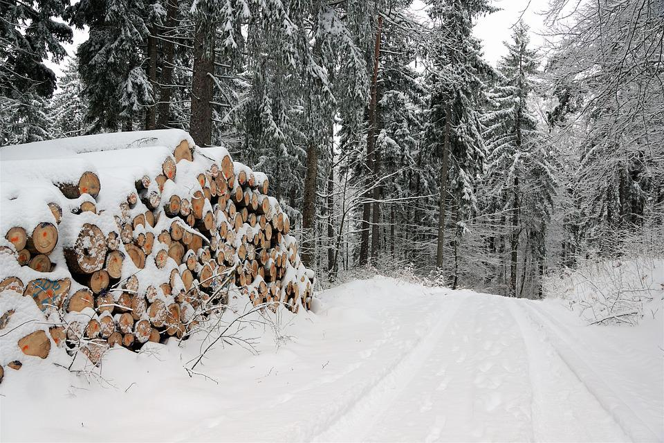 Snow, Winter, Wood, Cold, Frost, Season, Tree, Frozen