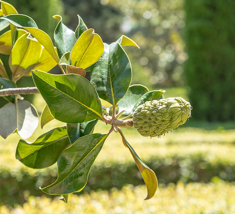 Berry, Fruit, Shrub, Tree, Garden, Parterre, Green