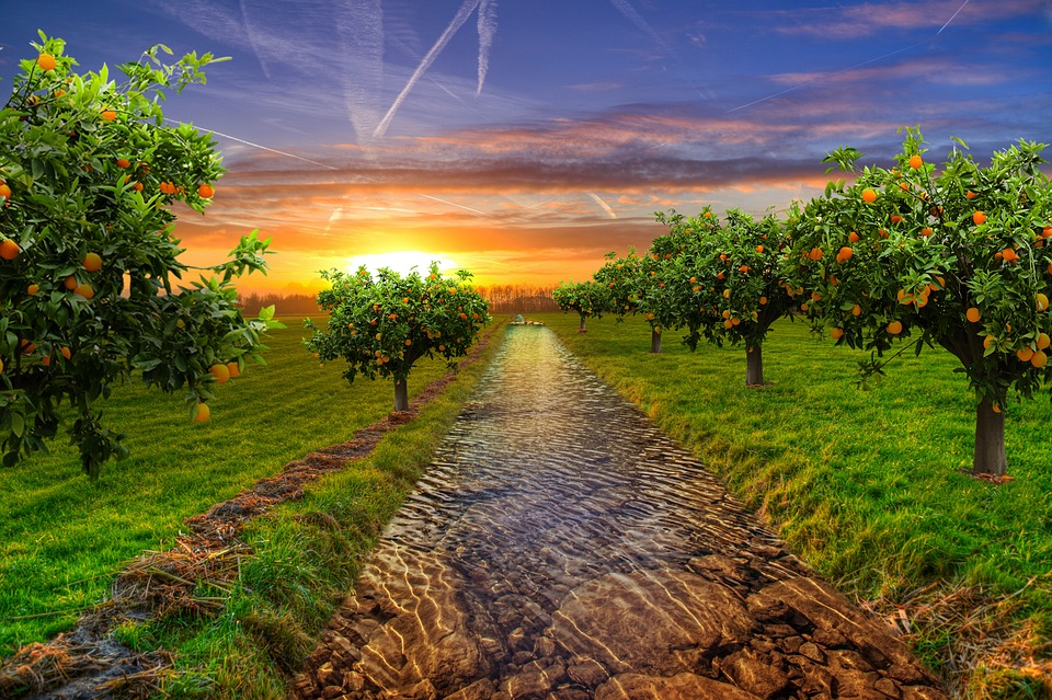 Garden, Tree, Orange, Nature, Fruit Tree, Green, Fruit
