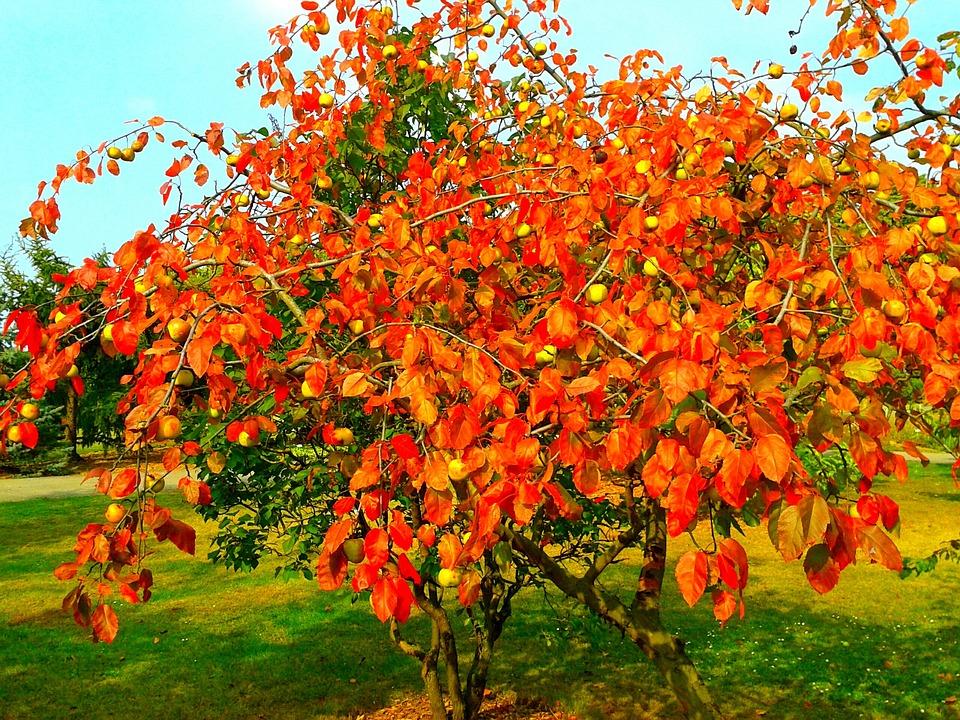 Autumn, Nature, Park, Orange, Tree, Garden