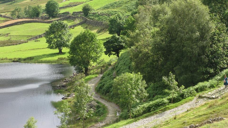 Nature, Summer, Landscape, Grass, Tree, Lake
