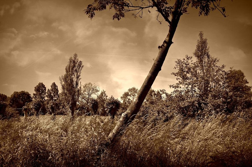 Tree, Lonely Tree, Field, Grass, Landscape, Scenic