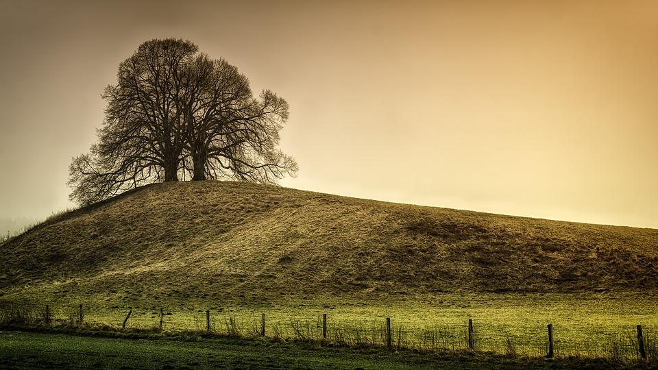 Tree, Hill, Green, Landscape, Nature, Meadow, Fence