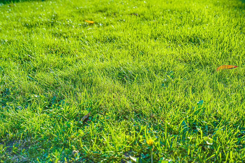 Grass, Green, Nature, Meadow, Tree, Landscape, Path