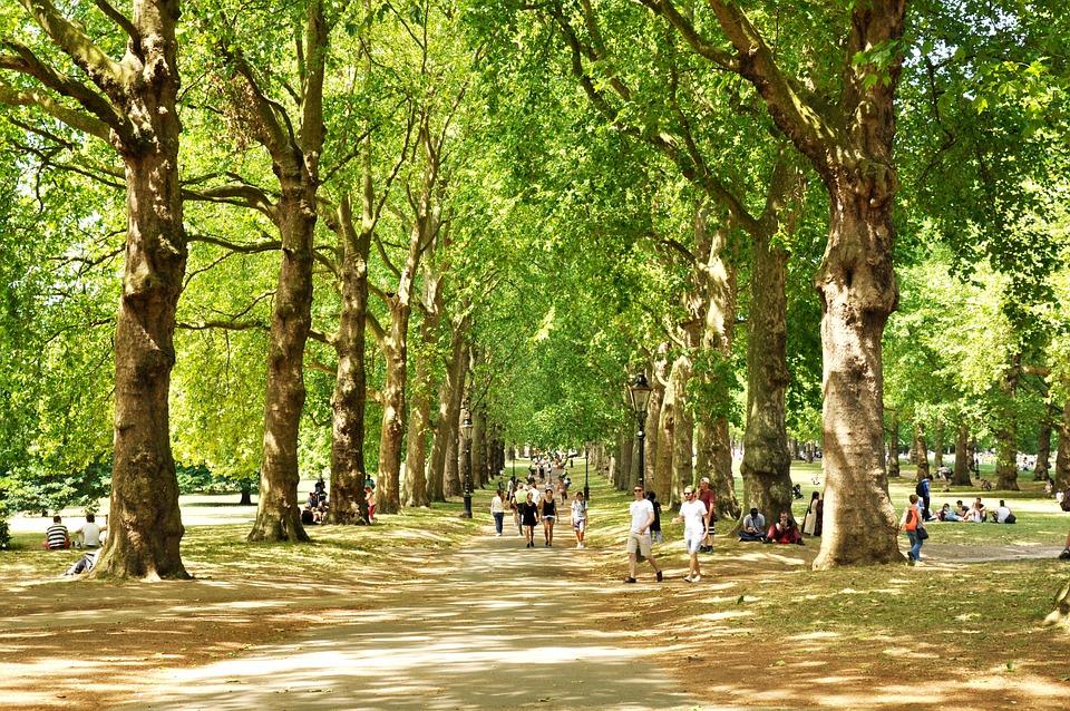 Green Park, London, Uk, England, Park, Tree, City
