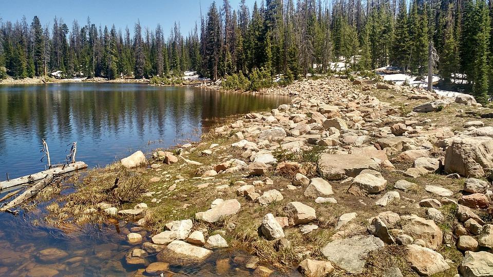 Shore, Lake, Trees, Calm, Tranquil, Green, Tree