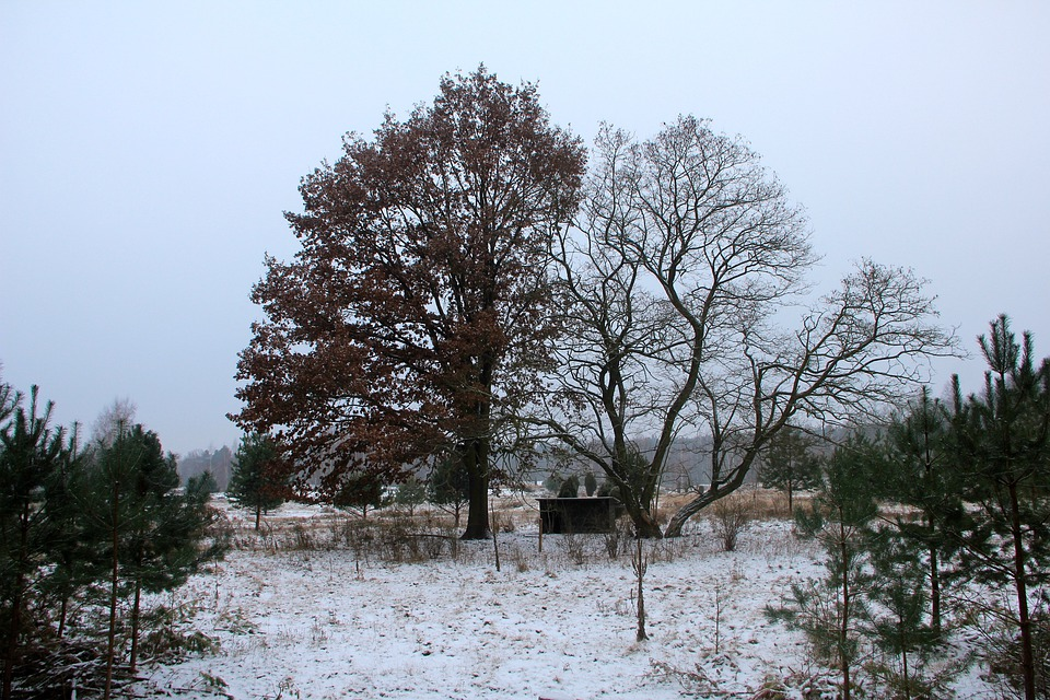 Nature, Winter, Grunewald, Tree, Snow, Landscape