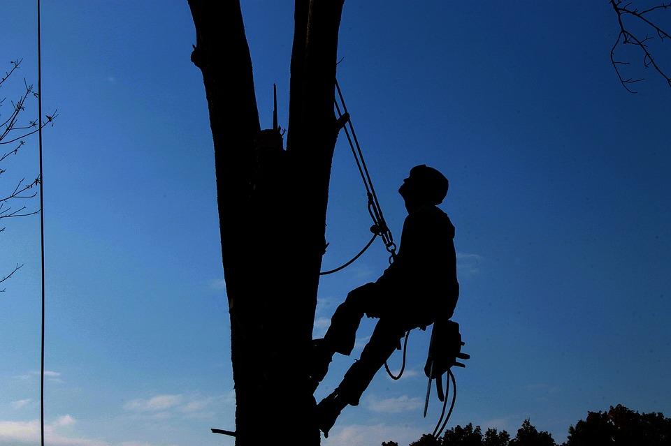 Tree Service, Hard Work, Lumberjack, Tree, Branch