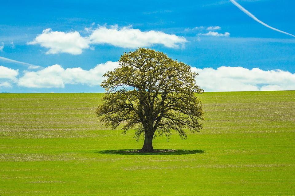 Tree, Spring, Country, Nature, Harmony