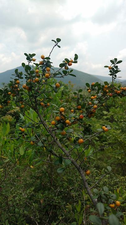 Fruits, Tree, Hills