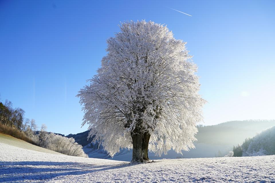 Tree, Wintry, Hoarfrost, Branch, Iced