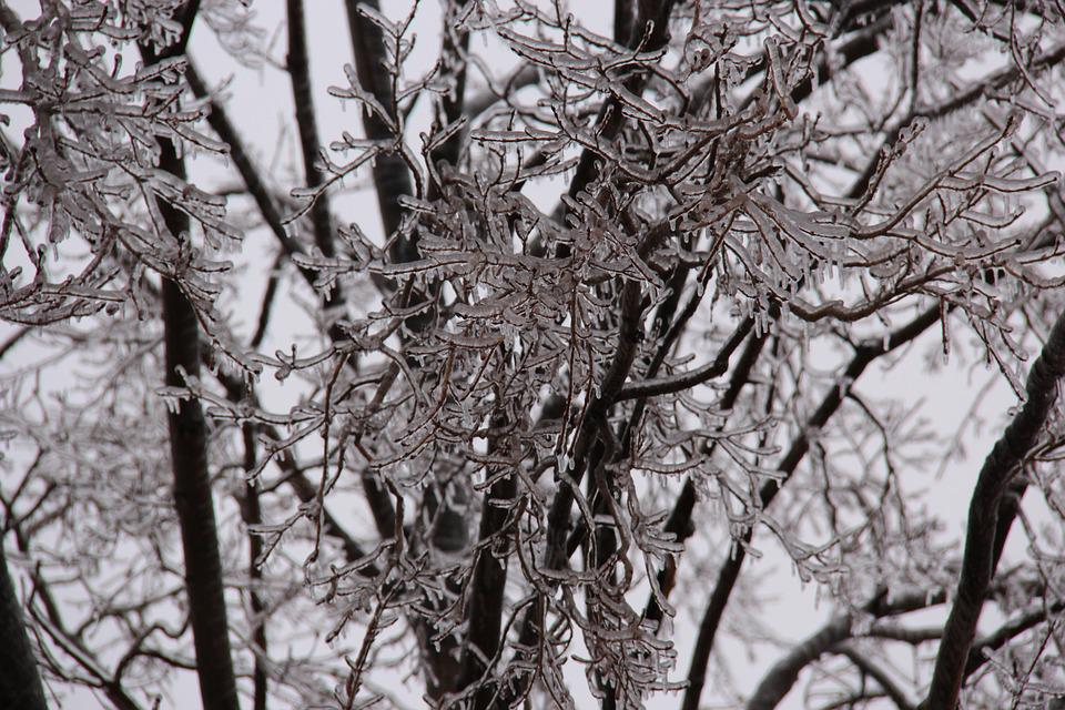 Icicles, Tree, Branches, Ice Storm, Winter, Icicle, Icy