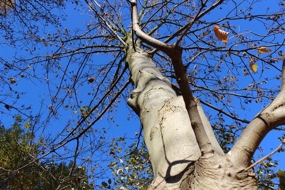 Tree, Autumn, Sky, Tree In The Fall, Mood, Blue Sky