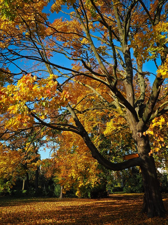 Autumn, Tree, Golden Autumn, Tree In The Fall, Mood