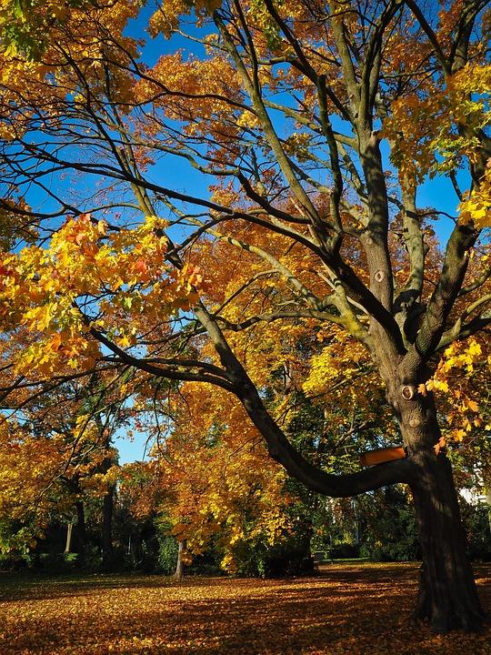 Autumn, Tree, Golden Autumn, Tree In The Fall, Mood