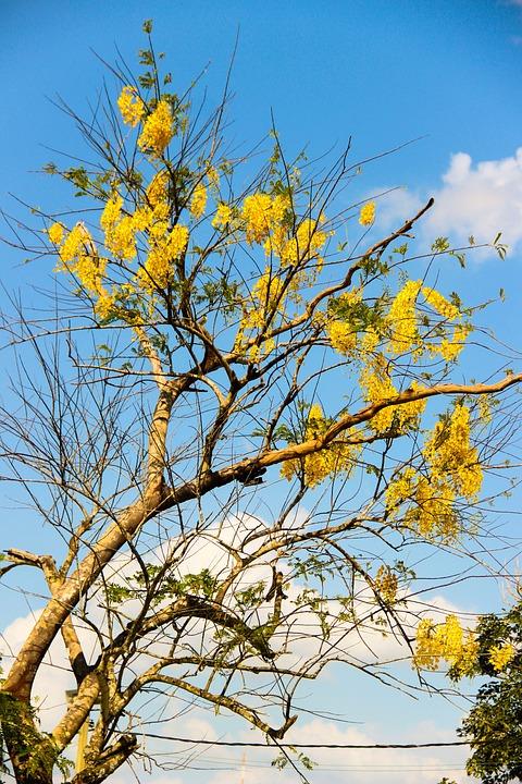 Ipê, Flying, Tree, Yellow Ipê
