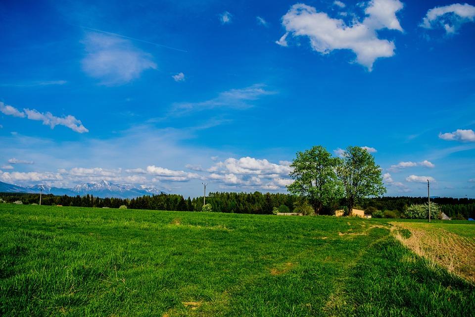 Tree, Mountains, Krivan, Meadow, Grass, Green, Path