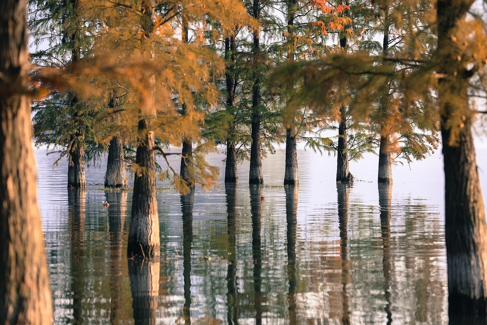 Tree, Lake, Water, Nature, Landscape, Forest