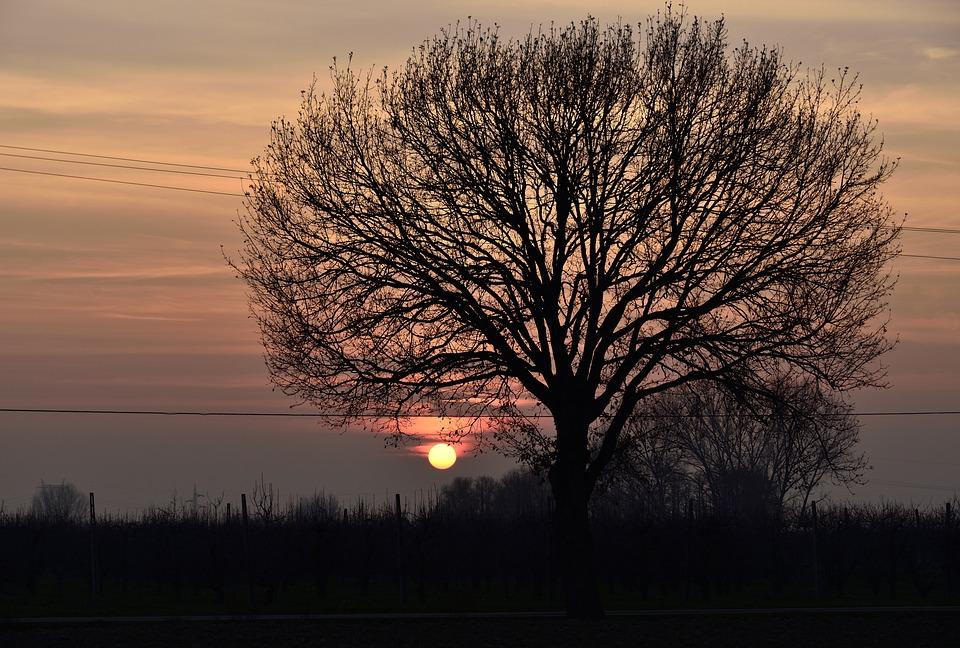 Sunset, Tree, Nature, Sky, Landscape, Clouds, Autumn