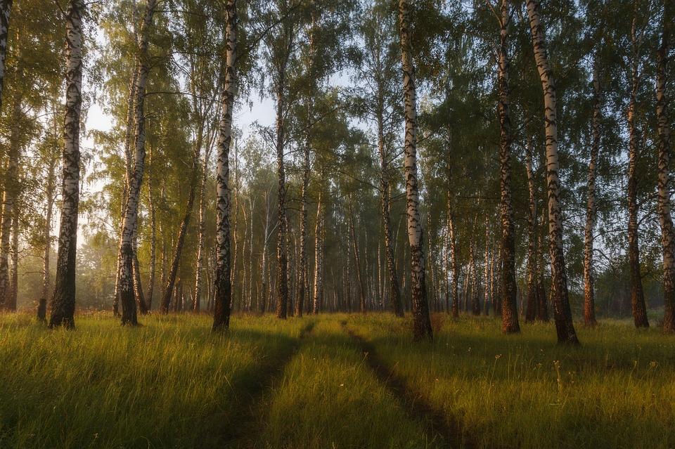 Tree, Nature, Landscape, Environment