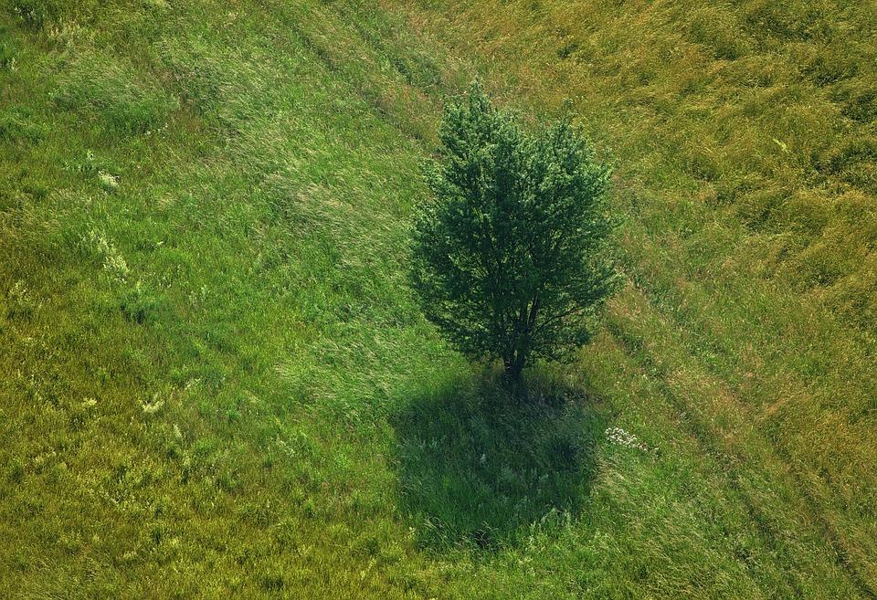 Grass Landscape Maxpixelstaticphoto1xtree landscape gr workwithnaturefo
