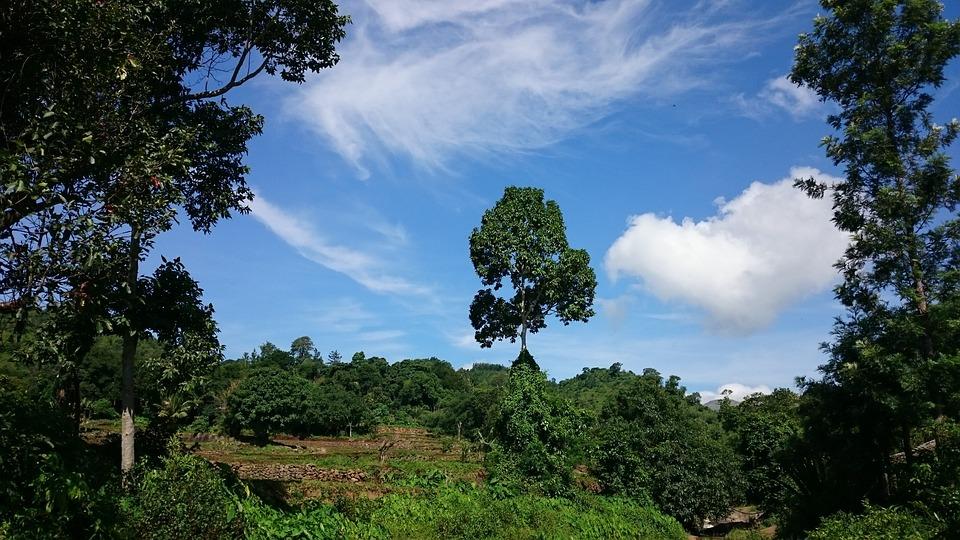 Tree, Sky, Land, Landscape, Nature, Blue Sky, Outdoor