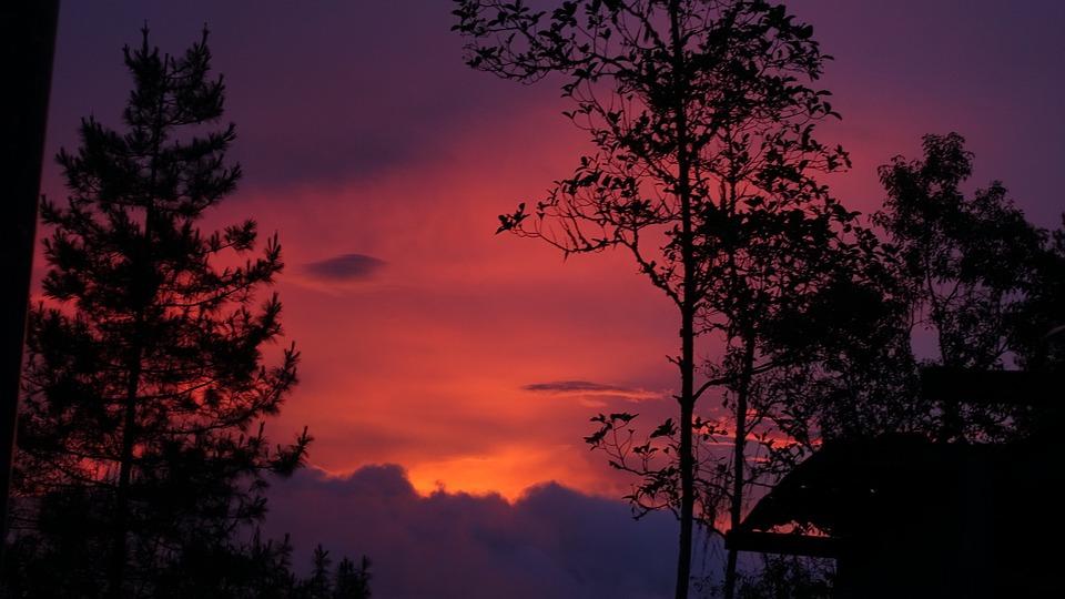 Tree, Dawn, Nature, Landscape
