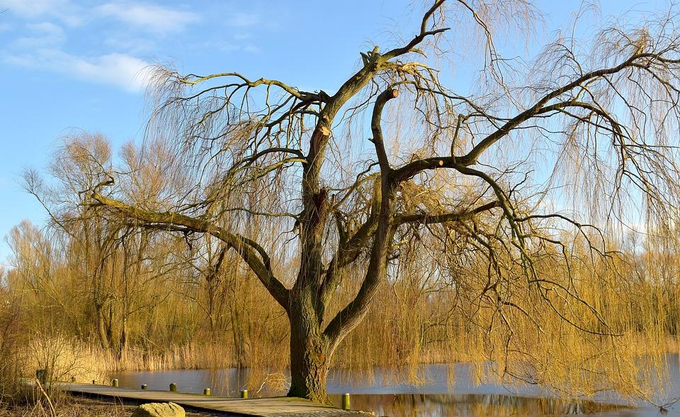 Tree, Nature, Wood, Landscape, Waters, Pasture