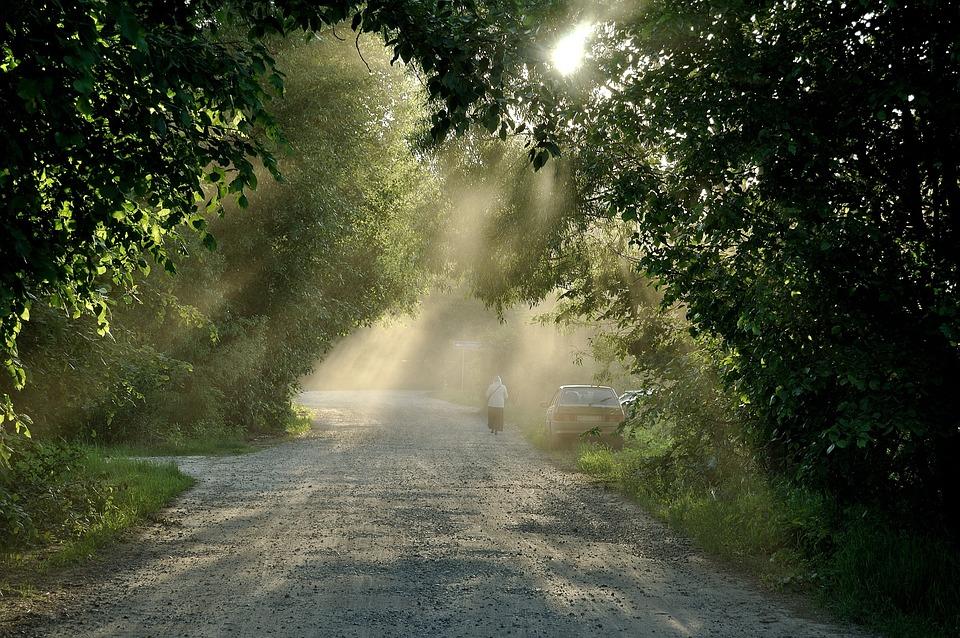 Road, Dust, Fog, Rays, Sand, Tree, Landscape, Nature