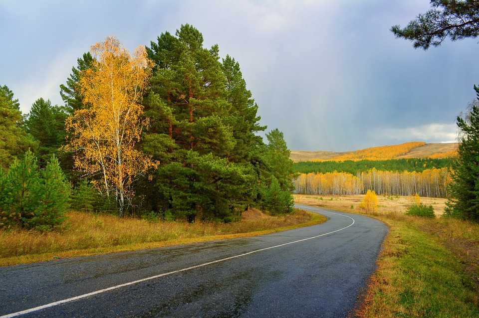 Autumn, Asphalt, Road, Landscape, Forest, Birch, Tree
