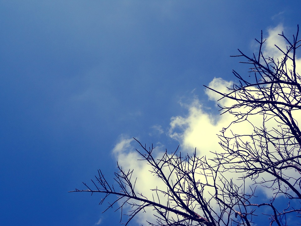 Sky, Nature, Clouds, Blue, Landscape, Tree, Blue Sky