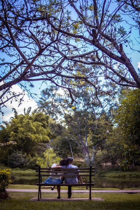 Tree, Nature, Wood, Landscape, Park, Outdoors, Plant