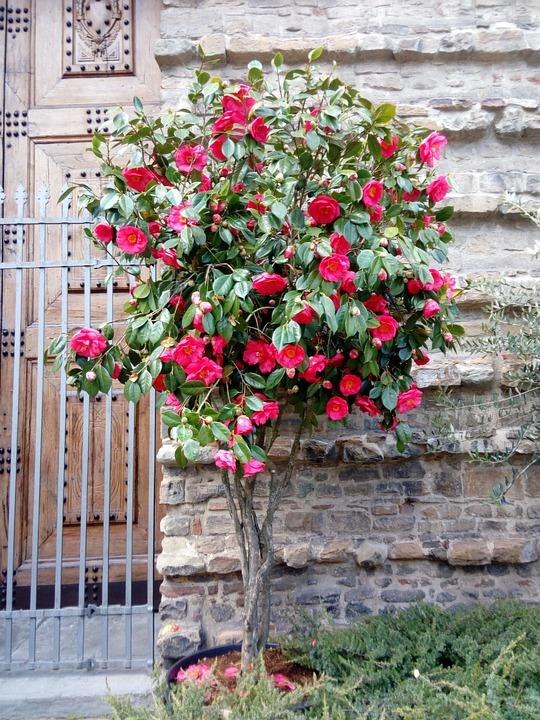Flower, Flora, Garden, Decoration, Leaf, Wall, Tree