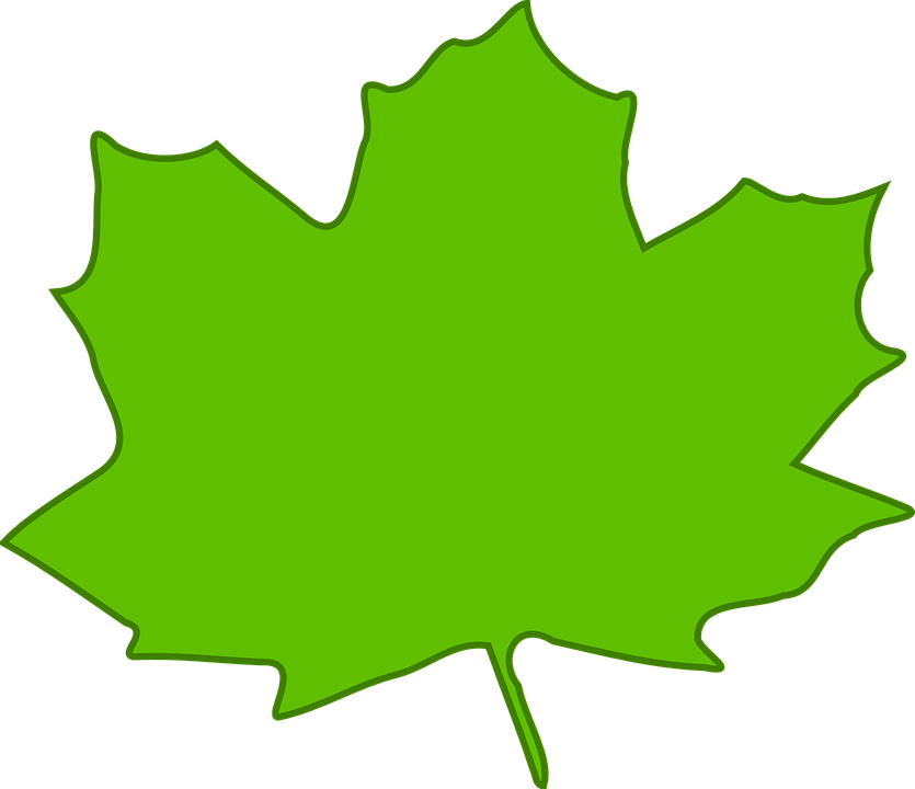 Maple, Leaf, Green, Plant, Nature, Foliage, Tree