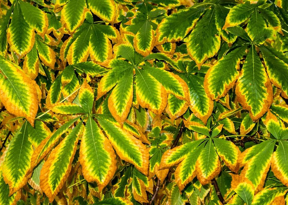 Brown, Tree, Autumn, Nature, Autumn Leaves, Leaves