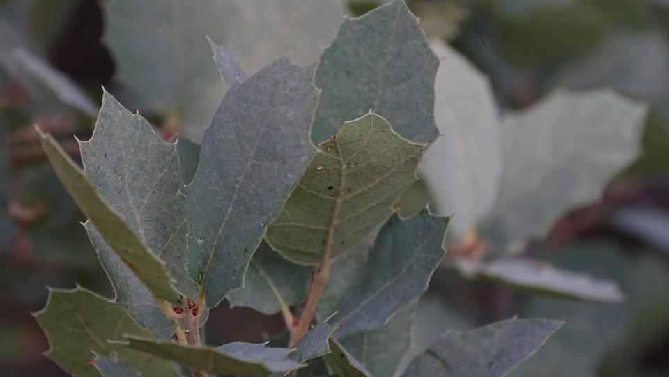 Leaves, Foliage, Plant, Branch, Bush, Tree