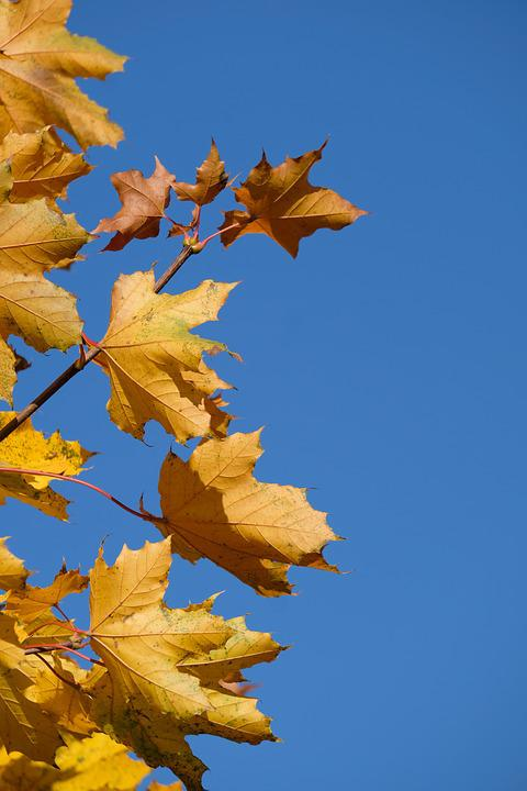 Tree, Leaves, Branch, Colorful, Color, Autumn, Sky