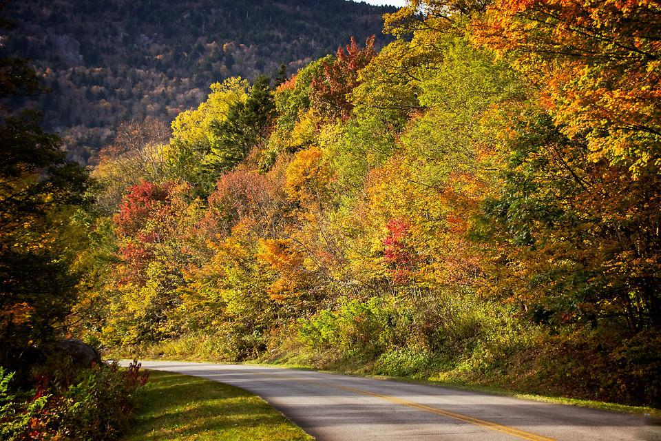 Fall, Autumn, Road, Leaves, Nature, Colorful, Tree